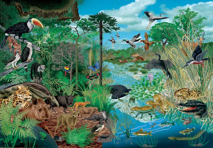 Ecosistema es el conjunto formado por los seres vivos que habitan en un determinado lugar y las relaciones que se establecen entre todos sus componentes y el medio en el que viven.