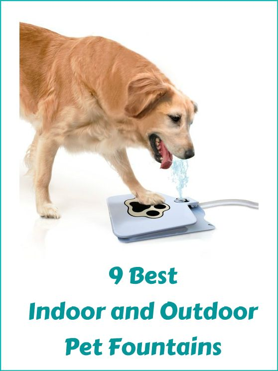 9 Best Indoor And Outdoor Pet Fountains For Your Dogs and Cats  ... see more at InventorSpot.com