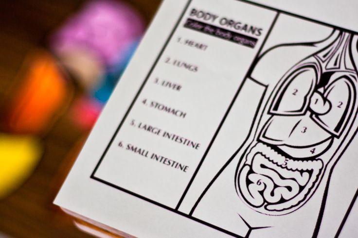 Domowy bajzel: Domowe przedszkole - Anatomia z czterolatkiem