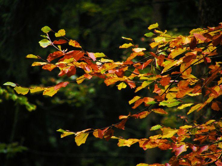 "Nine shots of autumn...  photo no.6 ""yellowed leaves"""