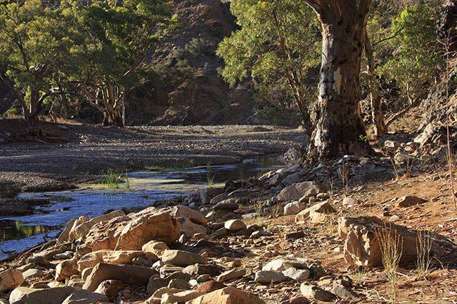 Parachilna-Creek-2.jpg (640×427)