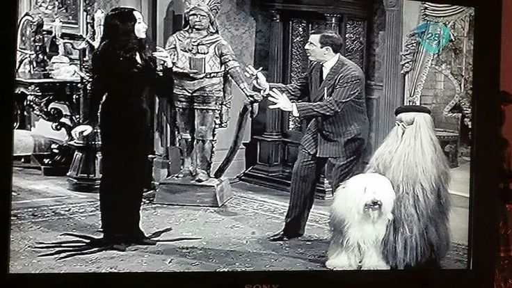 Old English Sheepdog on set of 1960s TV show, The Adams Family