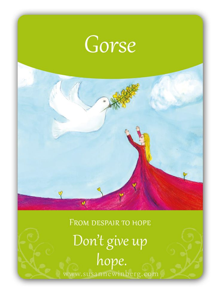 Gorse - Bach Flower Oracle Card. Don't give up hope. http://www.susannewinberg.com/bach-flower-oracle-cards/
