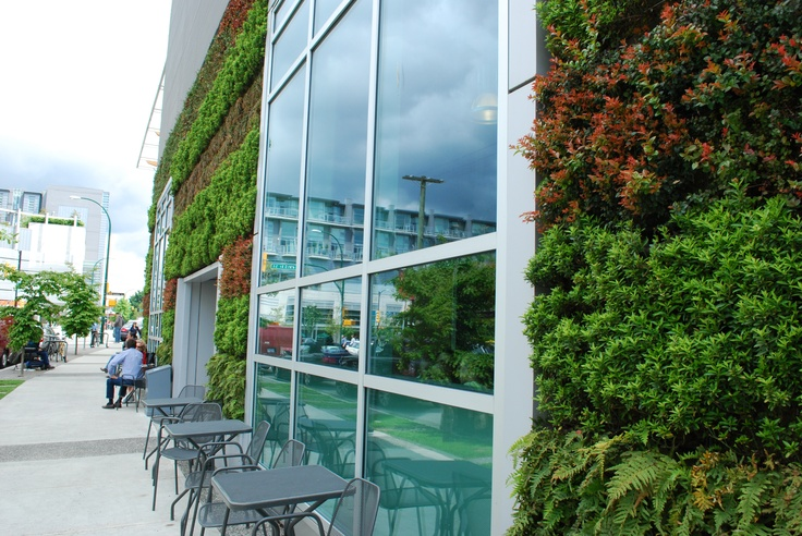 The Whole Foods Cambie store in Vancouver features a 2,001 square foot green wall that wraps the exterior of the building. A colorful wall of native plants embellish the north-facing wall of the building.