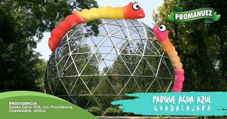 En #Promanuez te recomendamos visitar el  #ParqueAguaAzul este verano, pues es uno de lugares con más tradición en Guadalajara y ofrece la posibilidad de interactuar con aves exóticas, mariposas y muchísimas especies más de animales. Además, cuenta con hermosos paseos y espacios recreativos.   http://www.promanuez.com.mx/tiendas