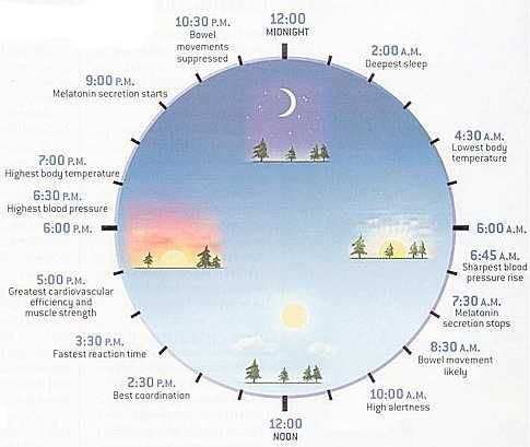 Circadian Rhythms, the Chinese Clock and How To Live in Sync | Yin Yang House