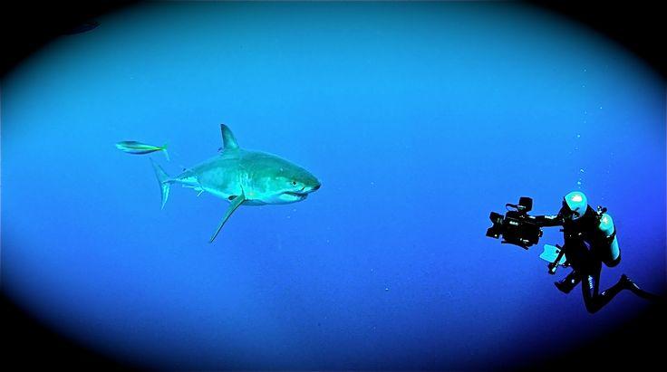 Las mejores 7 imágenes de El señor de Guadalupe: El gran tiburón ...