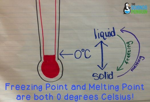 17 Best images about 5th Grade Science STAAR on Pinterest ...