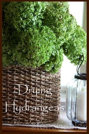 Drying hydrangeas-Stone Gable Blog: Gardens Ideas, Home And Gardens, Arrangements Ideas, Dry Hydrangeas, Flower Arrangements, Stones Gables, Buttons Flower, Green Flower, Drying Hydrangeas