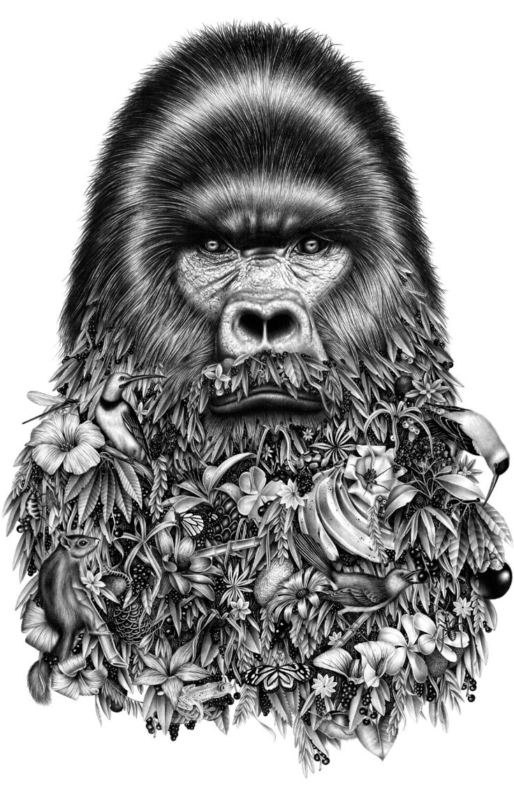 Uncategorized Gorilla Drawings 86 best gorilla images on pinterest crazy art devil and drawing surreal graphite drawings by violaine jeremy merge nature humor colossal