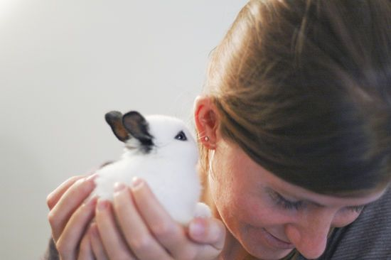 How to Understand Your Rabbit - bunny body language.