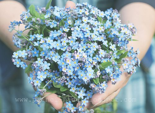 perfect forget-me-not blue bouquet. My Daddy gave me a packet of seeds, this pic is bittersweet