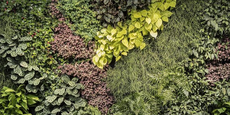 Greenwall E2 80 93 Tagwall Vertical Landscapes We Are Architects Of Using The Natural Environment As Our Inspiration Greenwalls Replacing Green Footprint. free architectural design software. architectural designs. architectural design schools. architecture design. architectural digest home design show.
