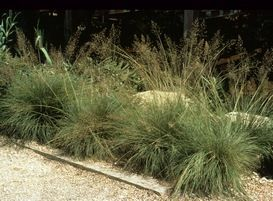 191 best images about horticulture grasses for zones 2 3 for Low mounding ornamental grasses
