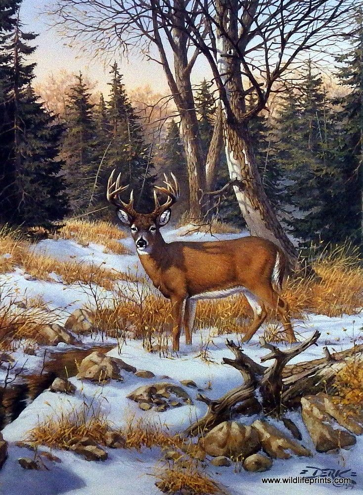Artist Derk Hansen Unframed Buck Deer Print On The Edge Of The Woods | WildlifePrints.com