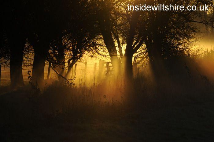 Sunlit gate, Harnham Watermeadows, Salisbury. More pics from the county http://bit.ly/1mthIsr