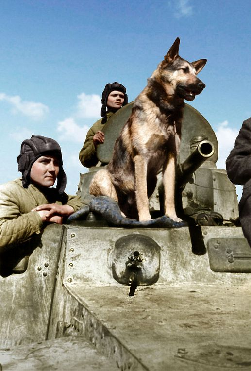 The crew of a Soviet armored car BA-10 E.Endrekson staff sergeant, sergeant V. P. Ershakov and Shepherd Dzhul'bars. Southern Front.