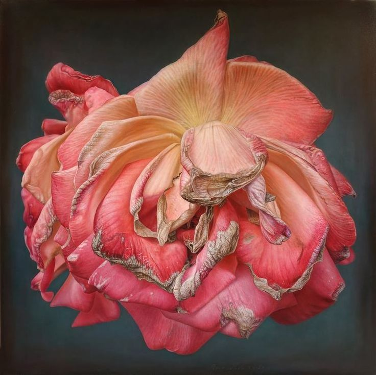 Delicate-hyper-realistic-paintings-of-roses-by-Gioacchino-Passini-01.jpg (740×738)