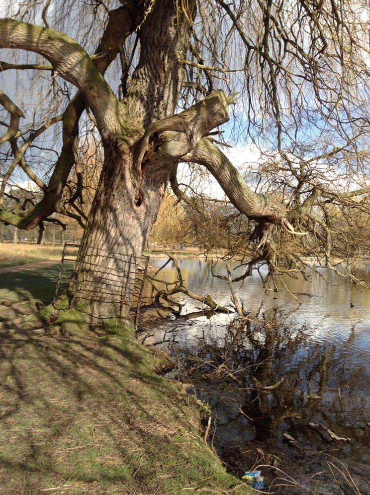 Bushy park Hampton court