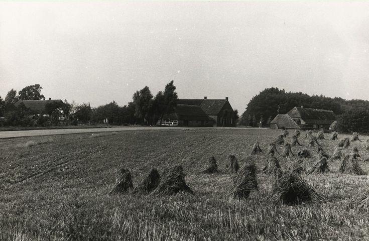 236185 Agrarische omgeving: boerderijen op Hersel nrs.17/...   Zoek resultaat   Fotohistorisch