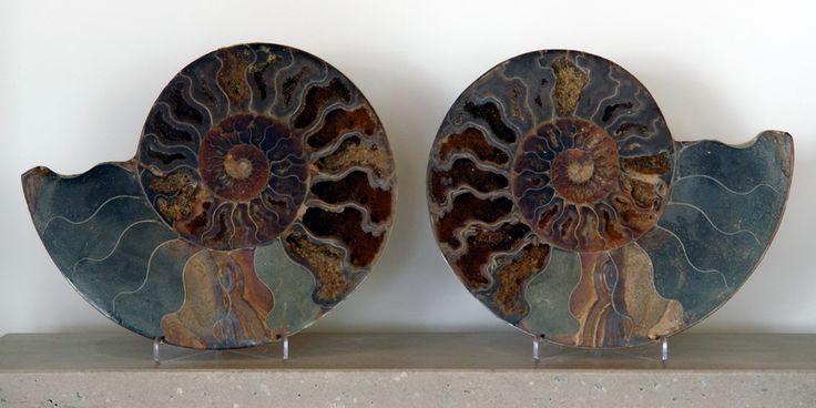 ammonite pair Madagascar  http://crystalworks.ca/html/ammonites.html#