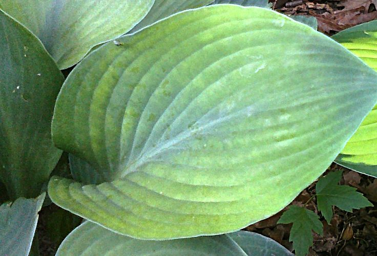 Large Leaf Welcome To My Garden Pinterest Gardens