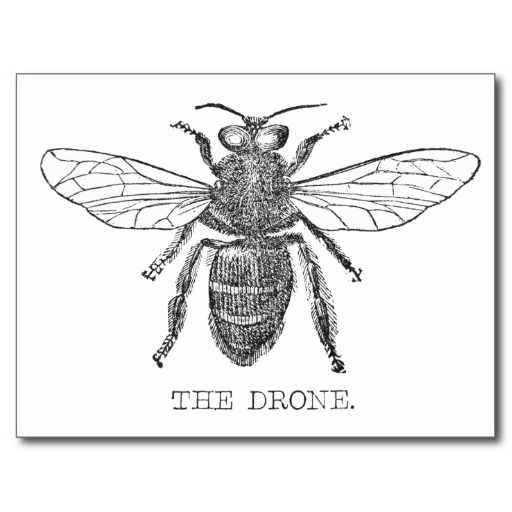>>>Are you looking for          Drone Bee Post Card           Drone Bee Post Card today price drop and special promotion. Get The best buyDiscount Deals          Drone Bee Post Card today easy to Shops & Purchase Online - transferred directly secure and trusted checkout...Cleck Hot Deals >>> http://www.zazzle.com/drone_bee_post_card-239829719756096622?rf=238627982471231924&zbar=1&tc=terrest