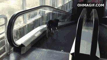 Animals confused (7)