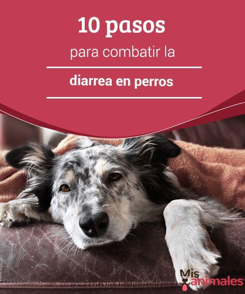 10 pasos para combatir la diarrea en perros ¿Quieres saber cómo combatir el problema de la diarrea en perros? Aquí tienes 10 pasos indispensables para tratar esta enfermedad. #alud #perro #diarrea #combatir