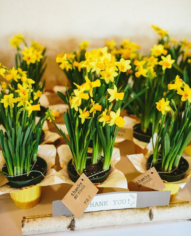Daffodil wedding favors | Hudson River Photographer | http://Theknot.com