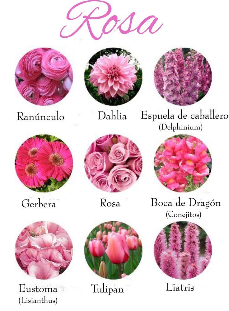 Las flores de color rosa que m s alegrar n nuestro ramo de - Clase de flores y sus nombres ...