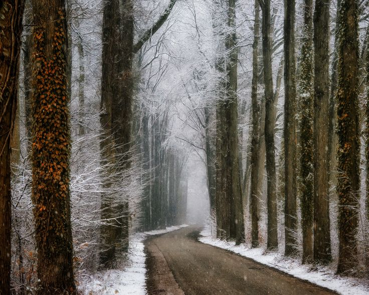 path through winter woodland