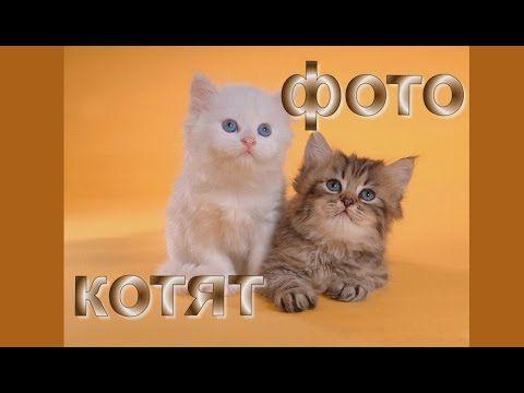 Фото котят: няшность зашкаливает!