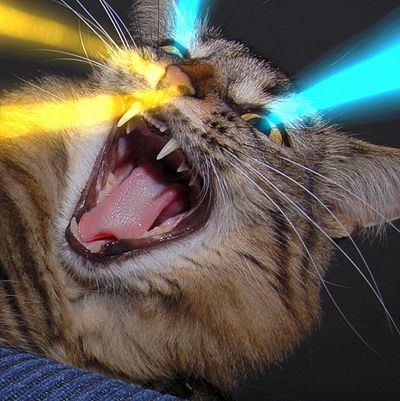 Google Image Result for http://therapyfree.files.wordpress.com/2010/03/laser-cat1.jpg