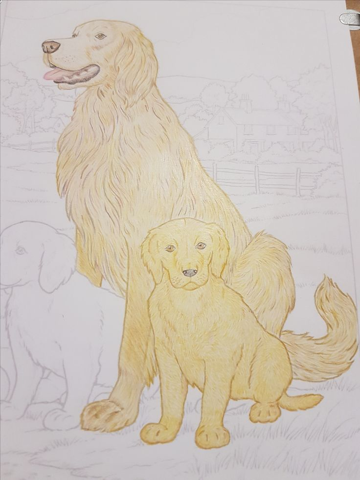 Work in progress - Adult coloring - Coloring books - Dogs