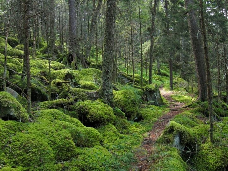 Forest on Baxter Creek Trail in Great Smoky Mountains National Park Photo - Visual Hunt