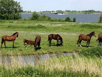 Foto met paarden