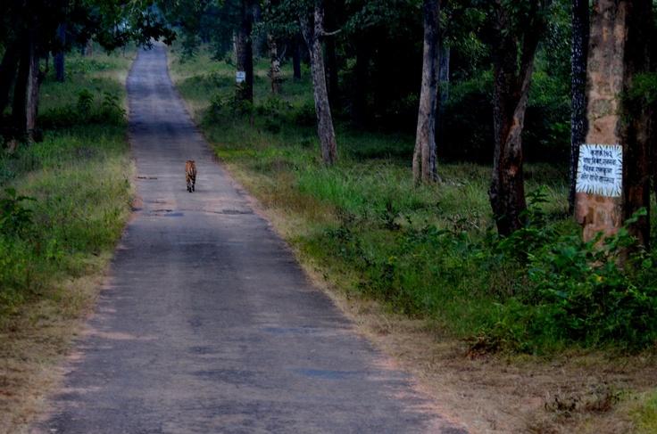 Ekla cholo re! Walk a lonely road! Bittu Sahgal, Tadoba Tiger Reserve, Maharashtra.