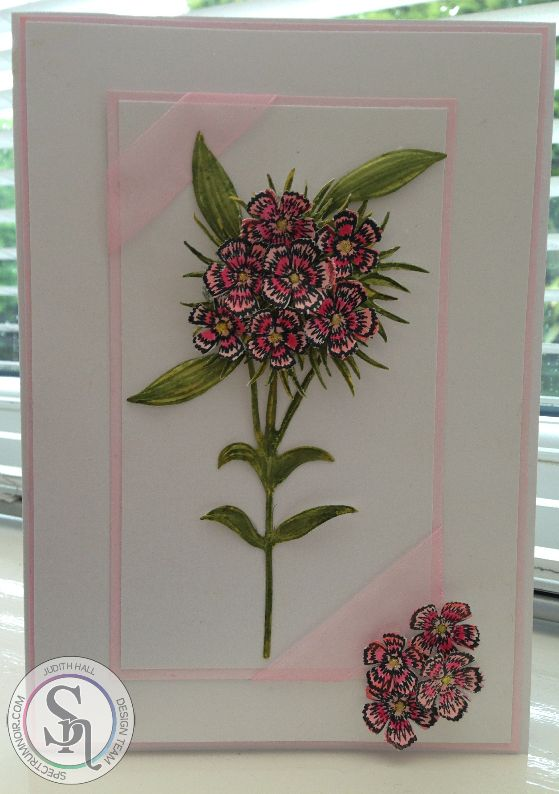 Judith Hall - Sheena Douglass Perfect Partners - Victorian Floral Sweet William - Aqua markers: Crimson, Blossom, Moss, Olive, Yellow -  Card coloured with SN pen PP1 -  Centura Pearl Snow White Hint of Gold card - #crafterscompanion #spectrumaqua #floral