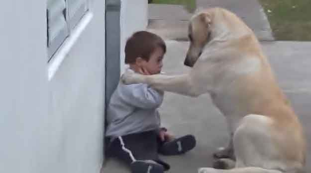 Dog Patiently Befriends Little Boy with Down Syndrome