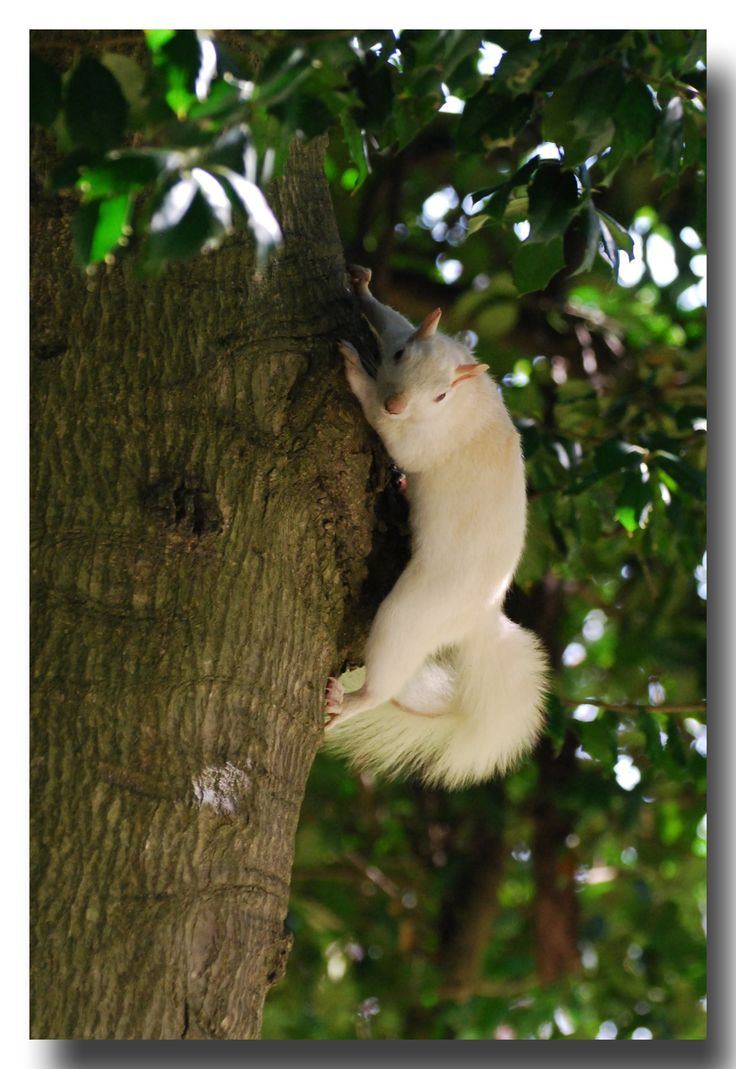 Meaning of white squirrel sighting - Olney Illinois Home Of The White Squirrel News Bubblews
