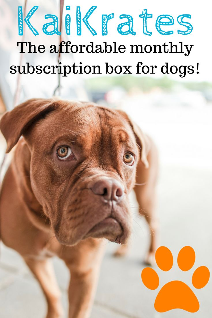 Like Indulging Your Pup? Try Our Dog Subscription Box!