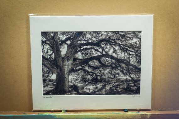 The Texas A&M Century Oak signed 8x12 by ScottNorrisPhoto on Etsy, $40.00