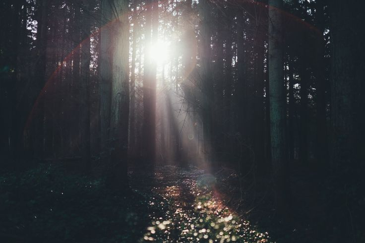 """Blog Post 39 - """"Light amidst Shadows"""" - The shadows creep up on one's soul with stealth..."""
