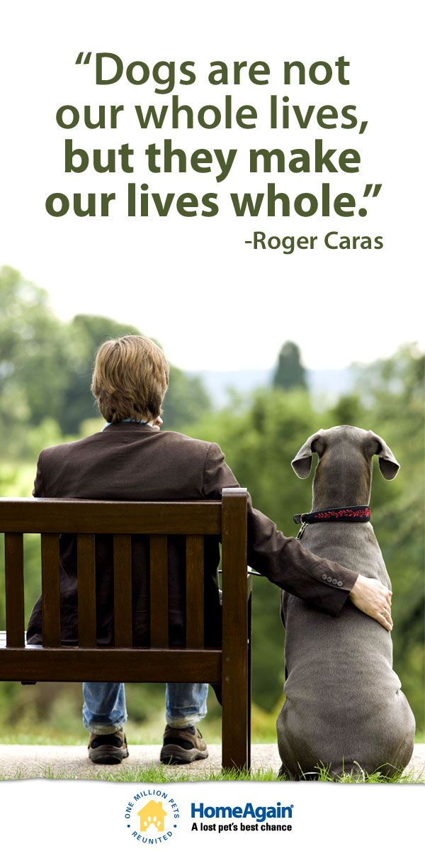 """Must love #dogs! Inspirational dog quote & cute Weimaraner pin """"Dogs are not our whole lives, but they make our lives whole!"""""""