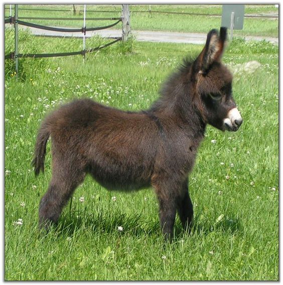 Mini Donkey | Cute Animals