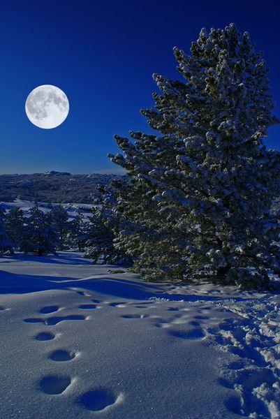 ∆ Moon Magick...Moonlight night by Alexander Karasev
