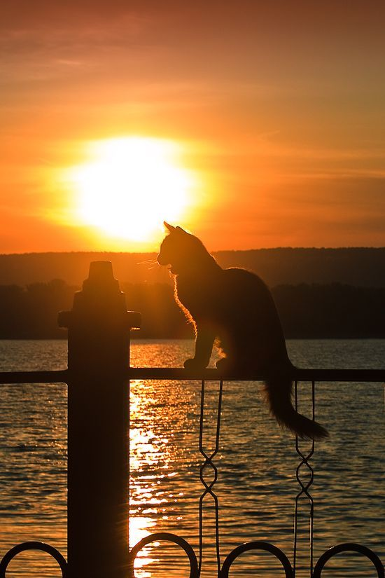 Sunset and kitty love #Nature #Sunset #Photography