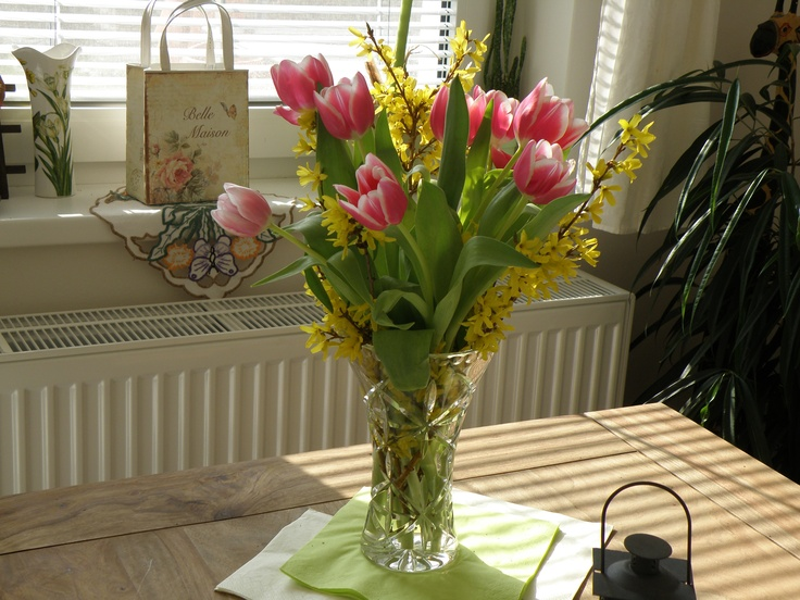 Do you see those nice tulips combined with the golden shower - forsythia? Some nice colours, both contrast and full. A beautiful tulips you can smell at the midday table. This is your little Dutch on the table.