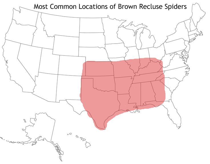 How to get rid of brown recluse spiders with images